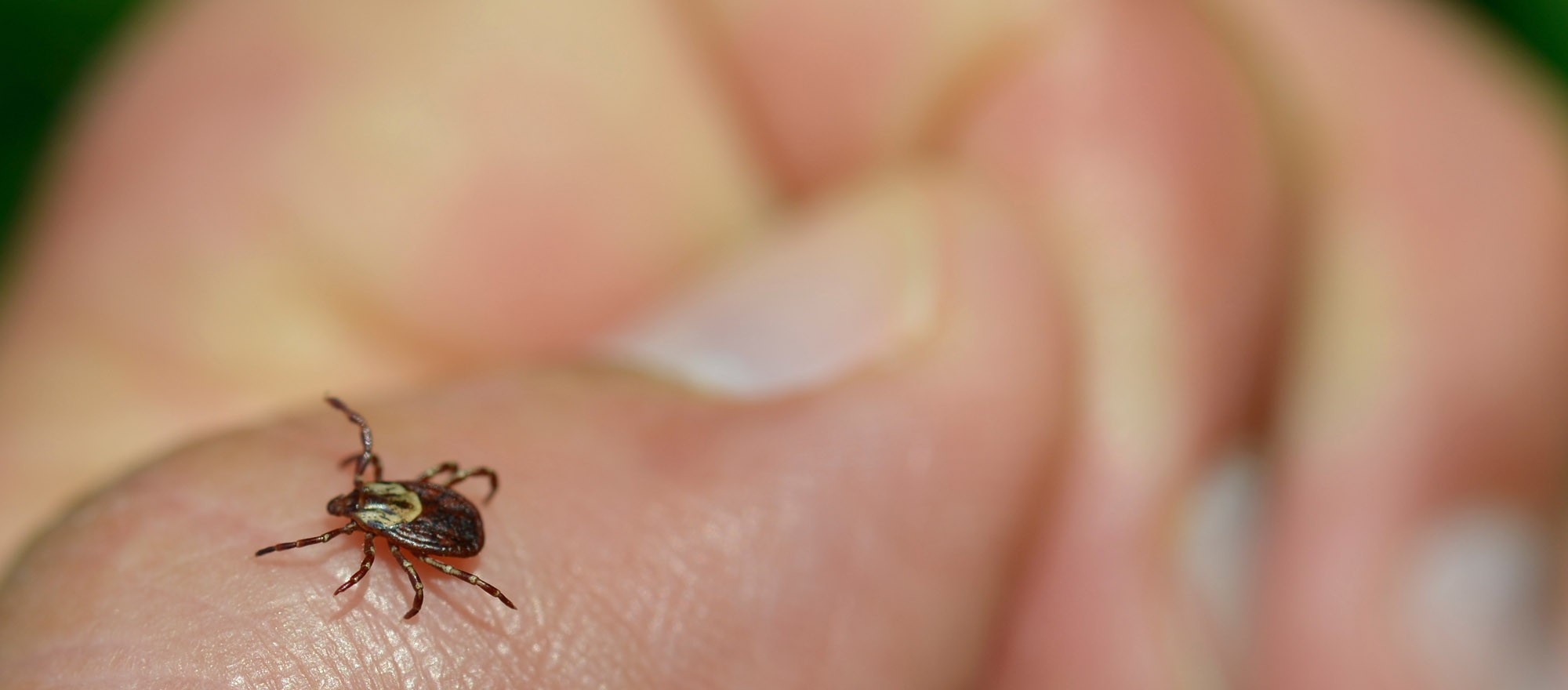 parke-company-emergency-services-tree-landscape-irrigation-maintenance-blog-How-to-Identify-and-Avoid-Unwanted-Bugs-and-Poisonous-Plants-Header-tick