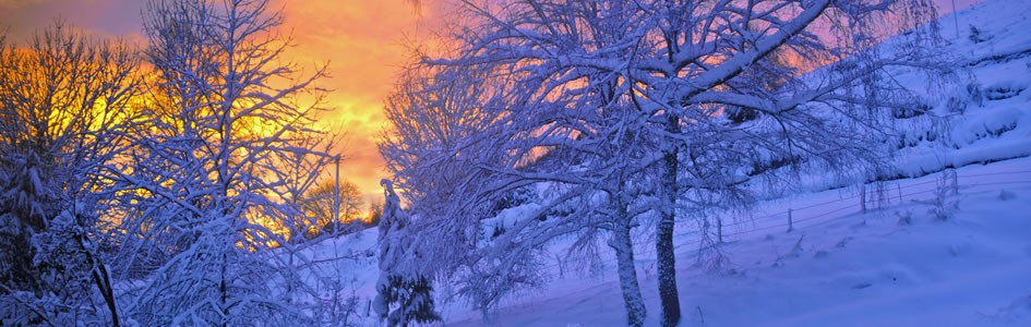 winter sunset and snowy trees
