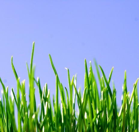 green grass closeup photo