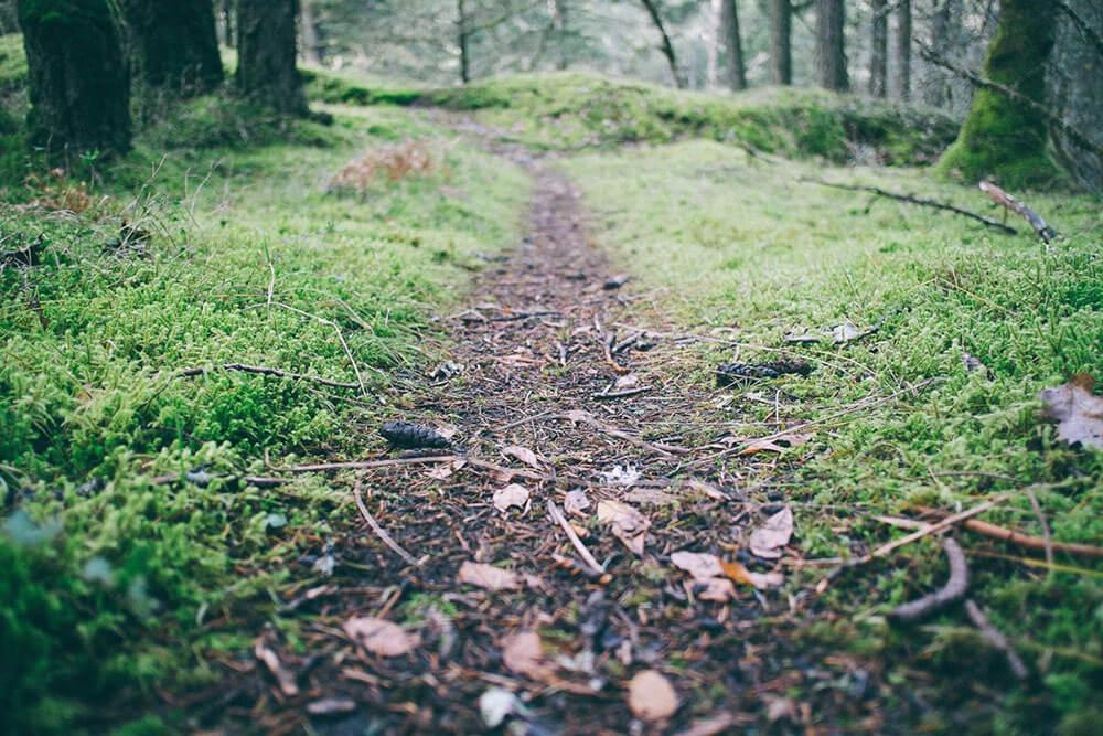 Fresh debris on a trail