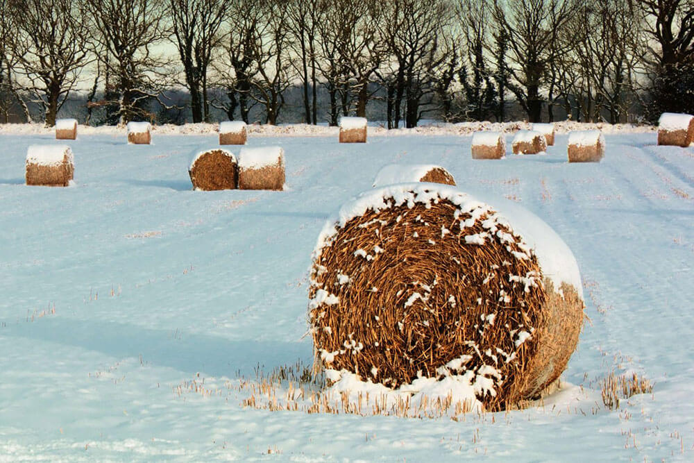 Snow falling on a bail of hay