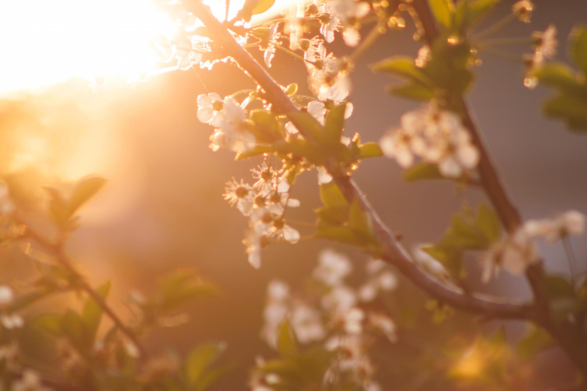 springtime nashville tn
