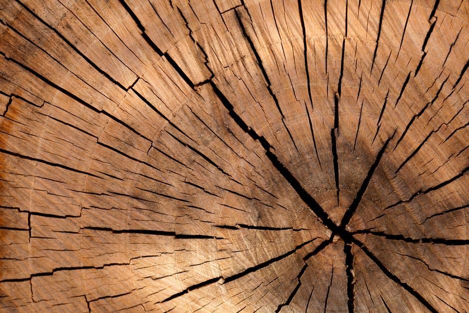parke-company-tree-removal-nashville-tn