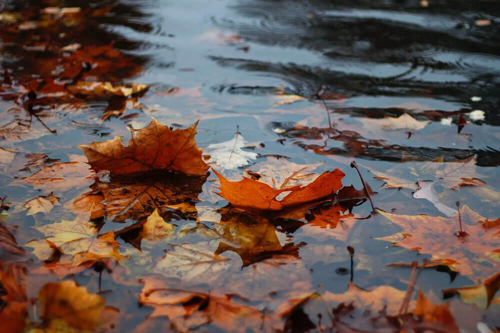 Leaves sitting on resting water