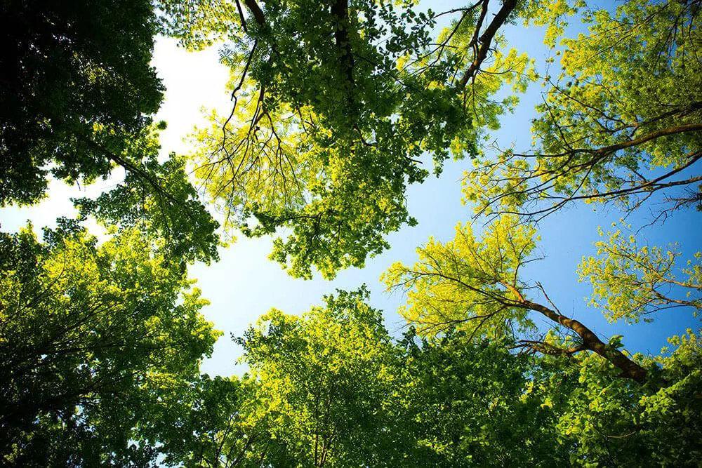 nashville-trees