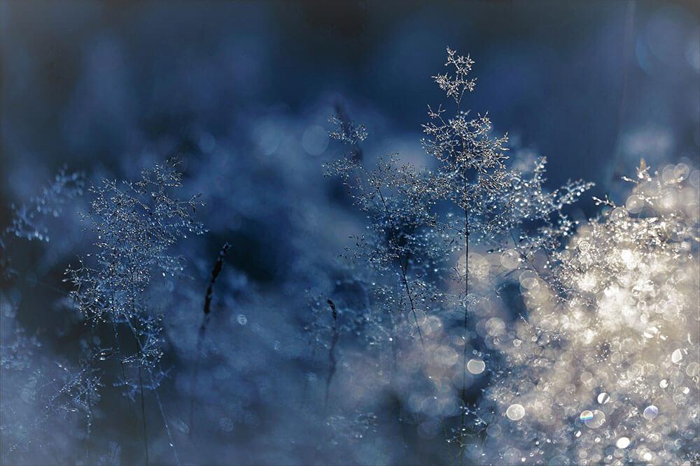Parke-company-nashville-winterization