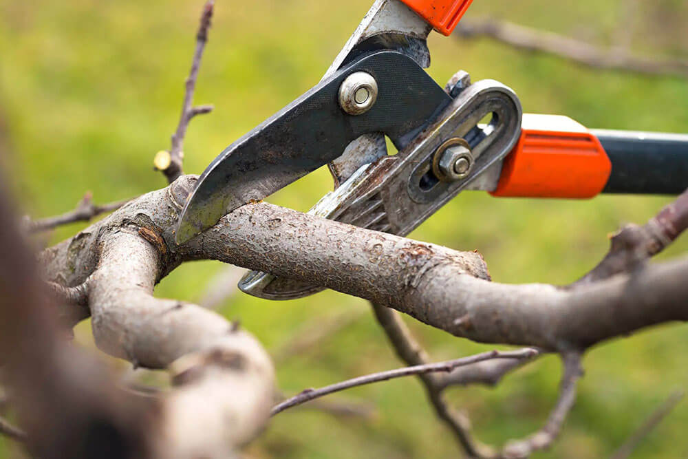 Parke Company pruning a shrub