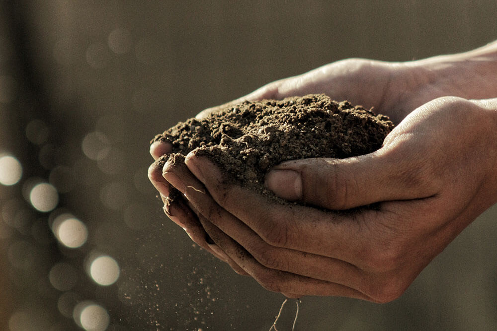 Parke Company soil in gardener's hands