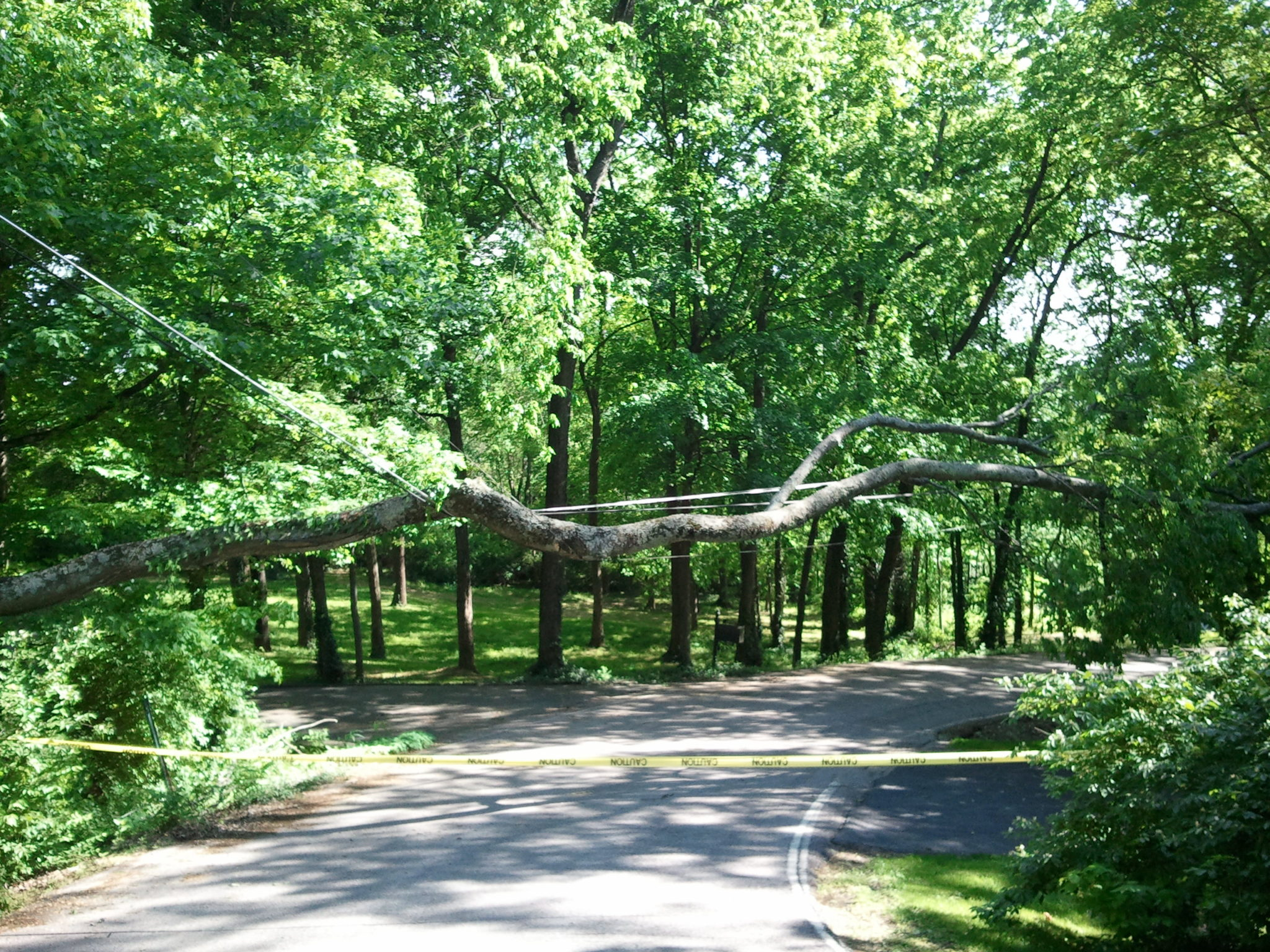 Protect Your Plants During Tree Service