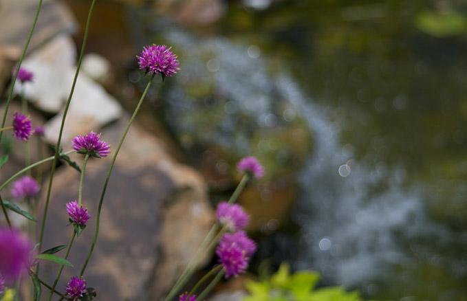 Parke-Company-tree-service-of-nashville-Enjoy-Rain-Gardens-Landscapes-More-This-Summer