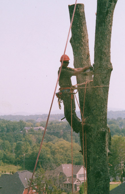 Parke-Company-tree-service-of-nashville-Five-Things-to-Know-Before-Climbing-Trees