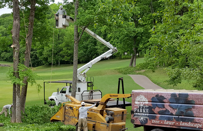 Parke-Company-tree-service-of-nashville-Reasons-Why-Working-for-the-Parke-Company-is-Awesome