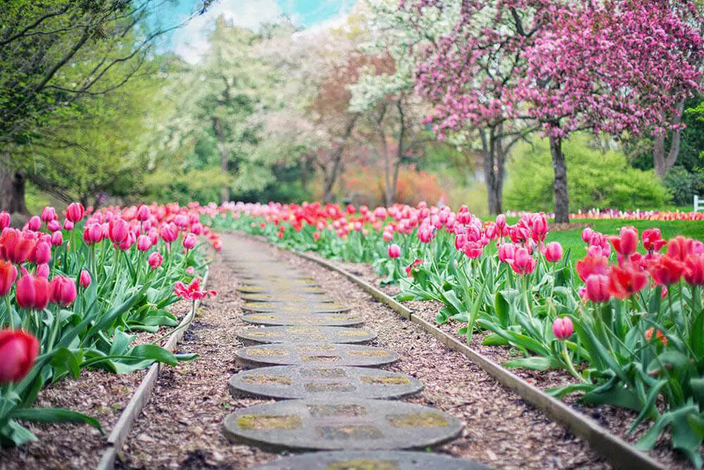 Gravel walkway with flowers