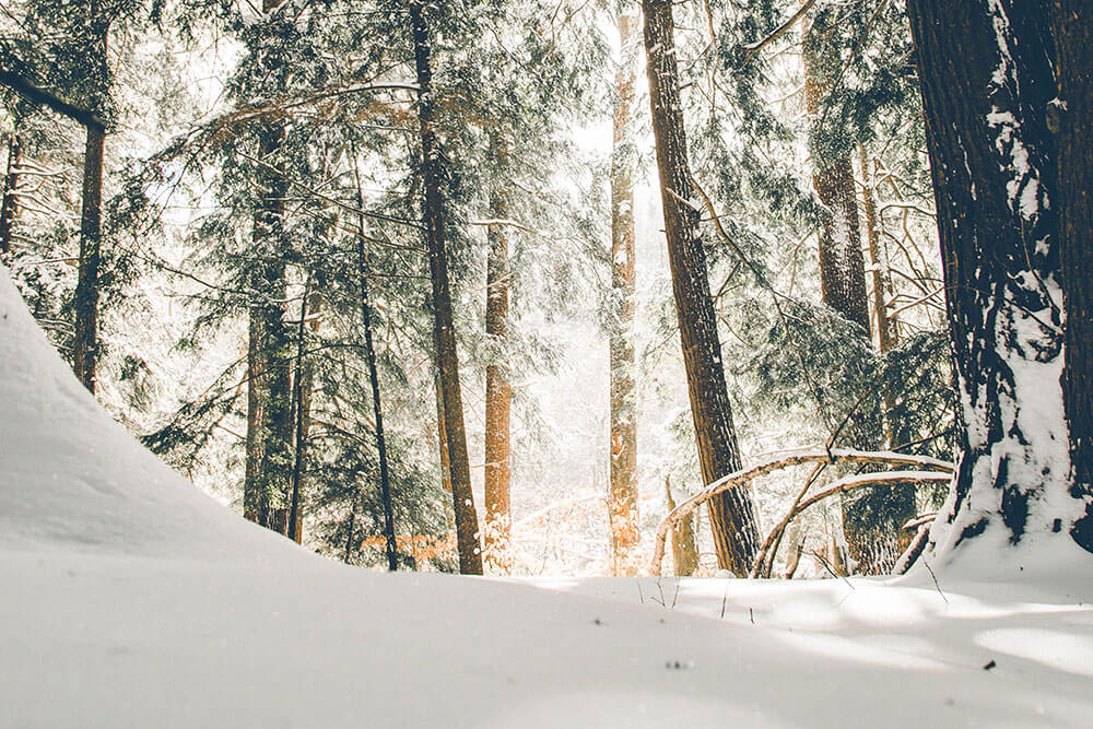 Snow falling throughout a forrest