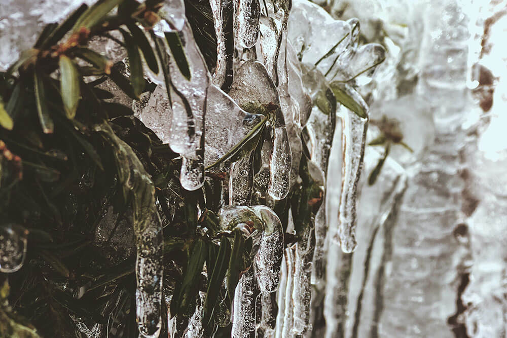 Icicles hanging from a bush