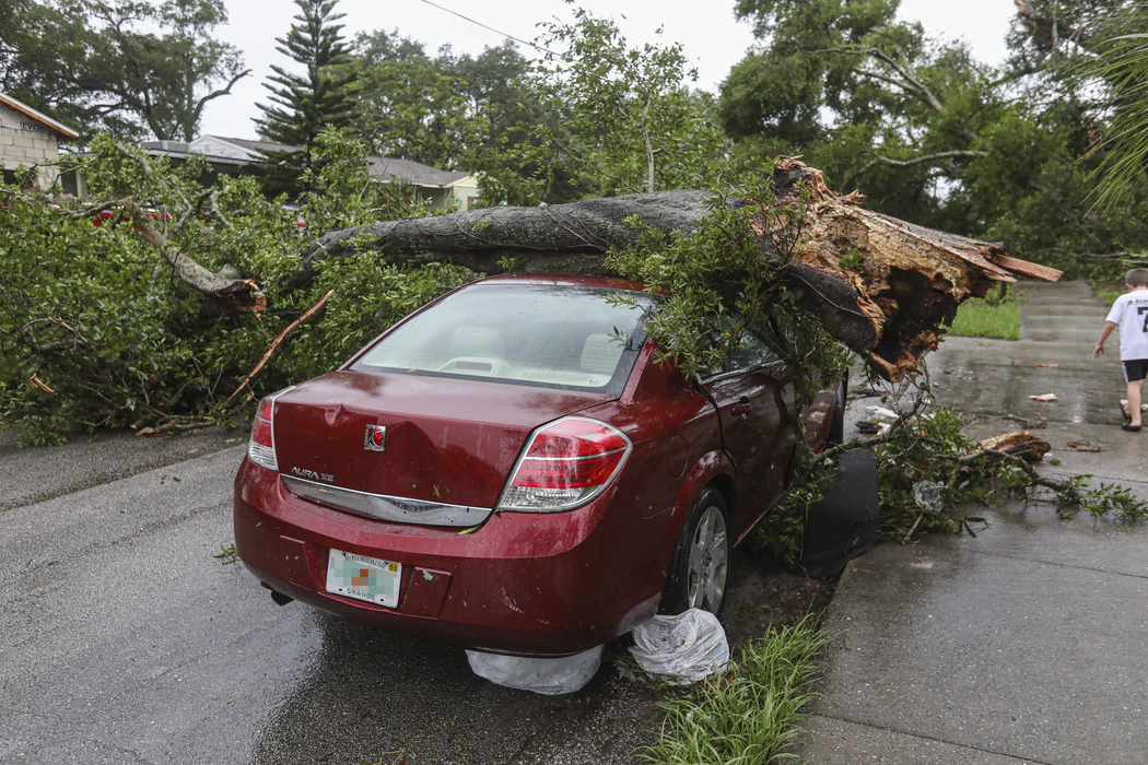 Tree fallen on a car