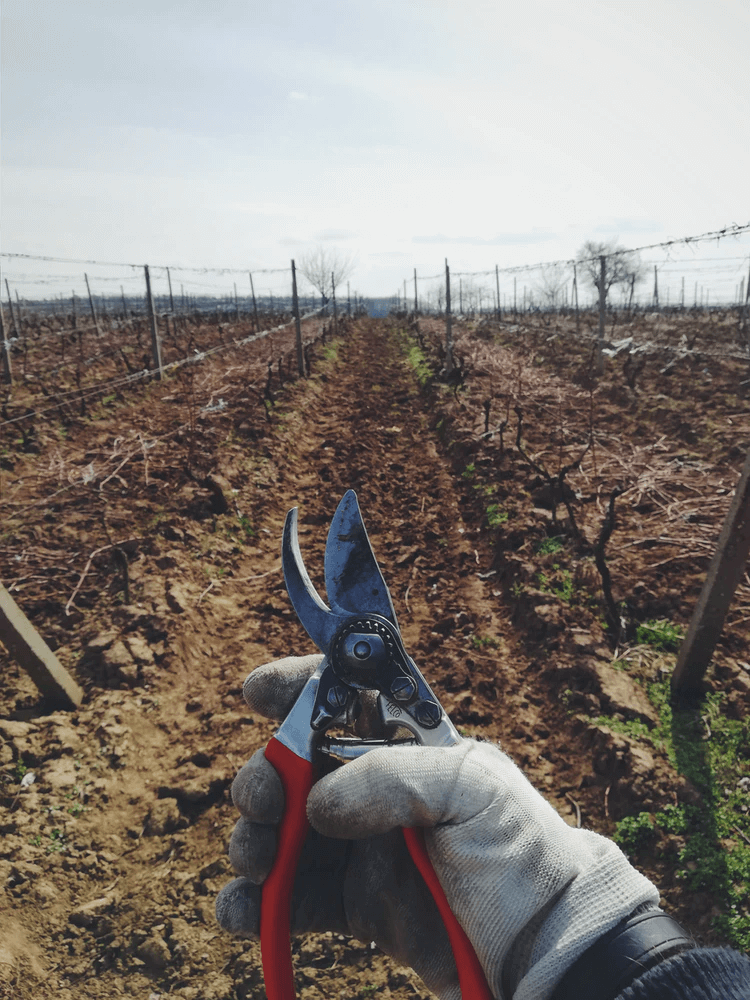 Person pruning plants on a plot of land